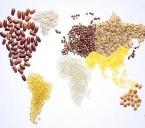 Küresel Gıda Güvenliği ve Mücadelede Öncelikler