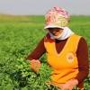 Tarımda Genç Girişimci Kadınlar Güçleniyor Programı